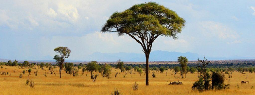 African-Savannah-Landscape - Copy